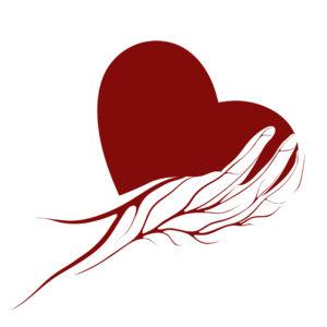 לב אדום מונח על יד על רקע לבן